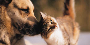 kat-hond-cremeren
