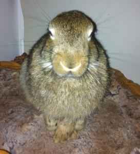 Bunny Nov 2014