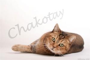 Foto Chakotay