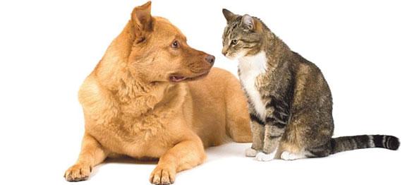 kat-hond-overleden
